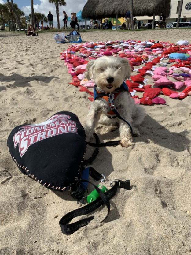 A Day in the Life of a Marjory Stoneman Douglas Therapy Dog