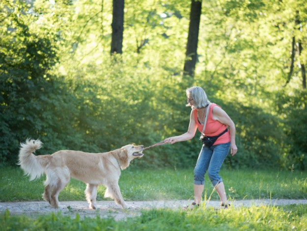 Osteoarthritis in Dogs — Signs and Treatment – American Kennel Club