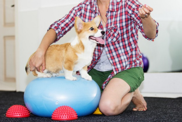 It's All Tricks Training: Preparing Your Puppy for Dog Agility