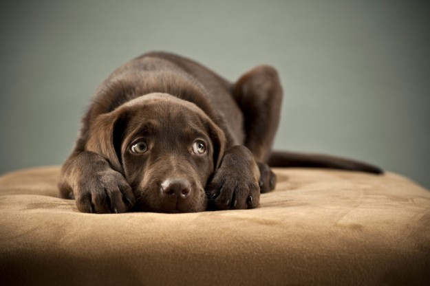 Dealing With Puppy Separation Anxiety