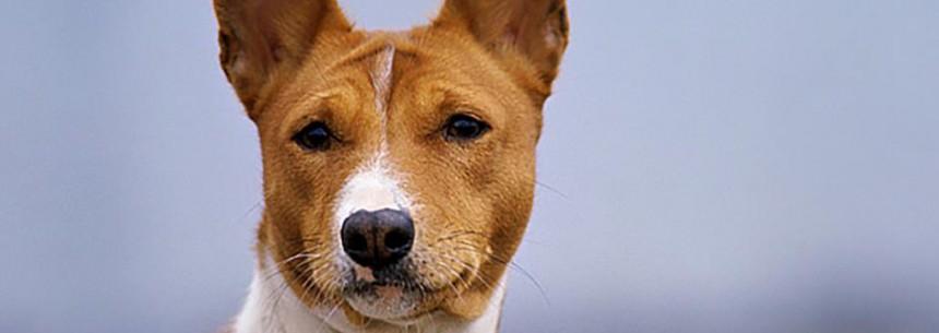 "The Secret of ""Hypoallergenic"" Dogs"